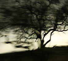 Tree of Dreams by Sally  Wellbeloved