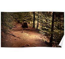 Falls Trail (Ganoga Glen) Poster