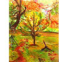 My Art Teacher's Crab Apple Tree Photographic Print