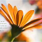 Daisy Backlit by JulieLegg