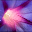 Petunia Purple by JulieLegg