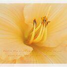 Lilly Orange by JulieLegg