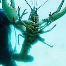 lobster and scubber by xxnatbxx