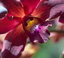 Maui / Exotic Ornamentals & Flowers by Susan R. Wacker