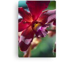 Maui Dendroblum Orchid  Canvas Print