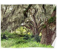 Beautiful Day in South Carolina  Poster