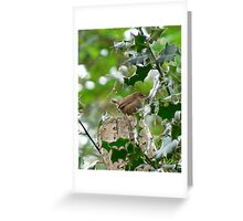 UK wren in a holly tree Greeting Card