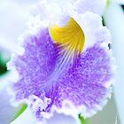 Maui Cattleyas Orchid  by Susan R. Wacker