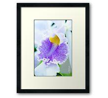 Maui Cattleyas Orchid  Framed Print