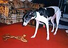 """Lucy and THE BONE:  """"I Must Be Dreaming"""" by AuntDot"""