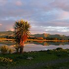 Reflections in a Pond - on a Journey in Christchurch - New Zealand by AndreaEL