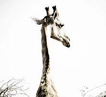Lone Giraffe by Sally  Wellbeloved