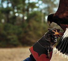 Falconry by Brett Clark