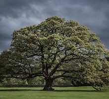 The Old Oak of Glenridding v2.0 by Chris Fletcher
