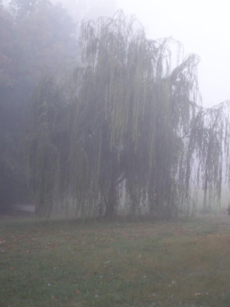 misty willow by Robyn Wilkey
