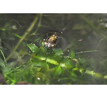 The world beneath the Potomac - Dragonfly nymph Photographic Print