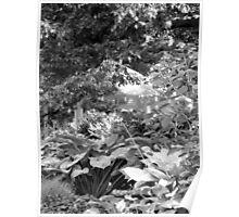 Seeing through the leaves Poster