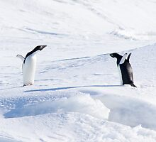 Penguin Stand-off by JamesStone