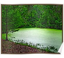 Algae Green Pond Poster