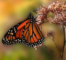 A Monarch Afternoon by Corinne Noon
