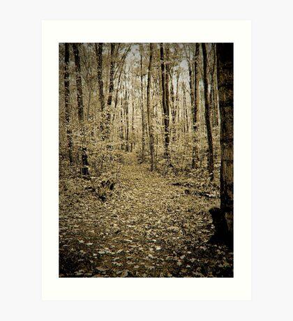Autumn Pathways  Art Print