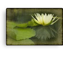 White Water Lily Texture Canvas Print