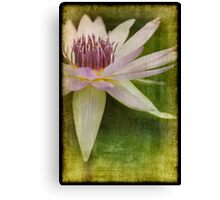 Pink Water Lily Texture Canvas Print