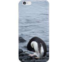 Pingu takes a bow iPhone Case/Skin