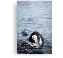 Pingu takes a bow Metal Print