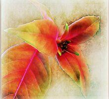 ~ Fuschia Leaves 2 ~ by Brenda Boisvert