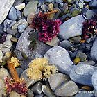 Colorful Seaweed by DoulaFaire