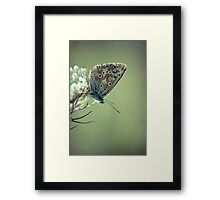 Wedding Blues Framed Print