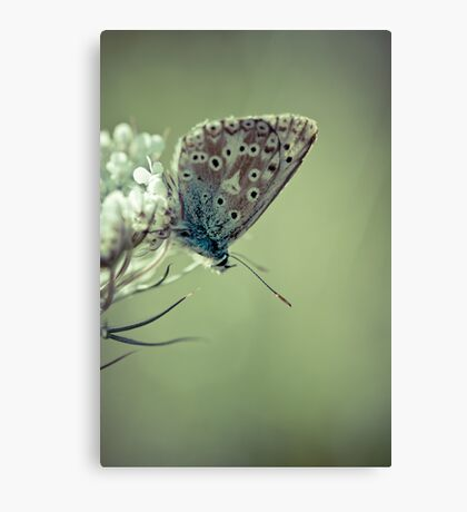 Wedding Blues Canvas Print