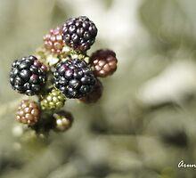 Blackberries delight by aruni