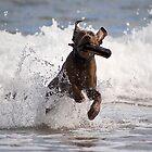 You throw, ill fetch. by nickdubgolf