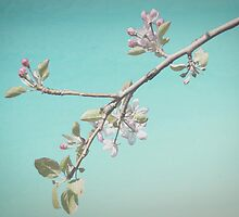 Pink blossom by Leanne Nelson