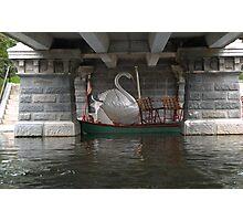 Garden Swan Boat Under Brige Photographic Print