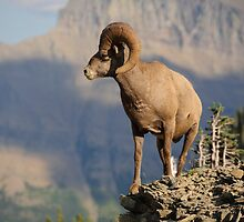 Big Horn Sheep #2 by JimGuy
