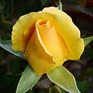 yellow by DearMsWildOne