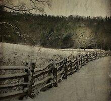 Along the Split Rail Fence by Christine Annas