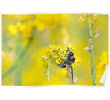 Bee Happy in Yellow Poster