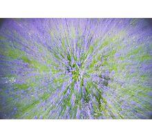 Lavender spray Photographic Print