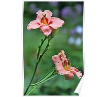 Daylilies - Elegant Candy Poster