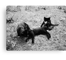 Kittens 2 Canvas Print