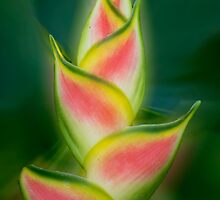 Tropical exotic by Jenny Dean