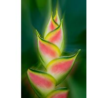 Tropical exotic Photographic Print