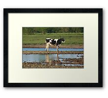 The Calf Framed Print