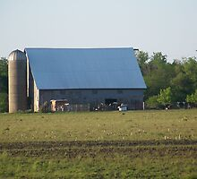 Pasture Gathering by the Barn by Hope Bruns