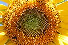Sunflower Center by RebeccaBlackman