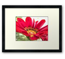 Macro beauty Framed Print